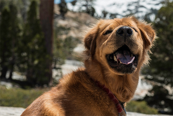 Dog hiking in Tahoe