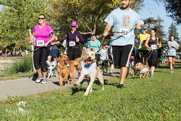 Walk N Wag event