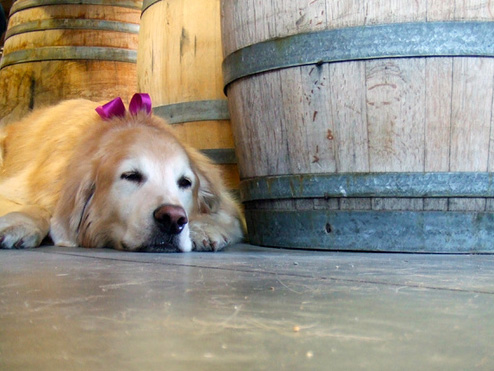 Winery dog