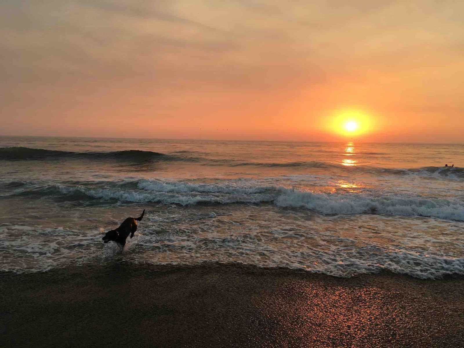 Cooper Enjoys the Sunset at Fort Funston, San Francisco
