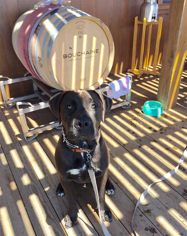 Humphrey at Bouchaine Winery