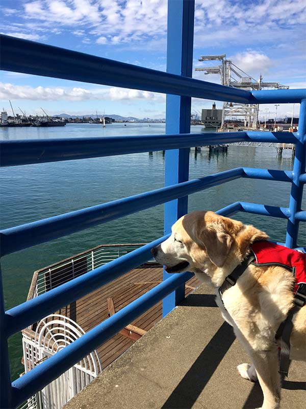 Kayla checking out the waterfront view