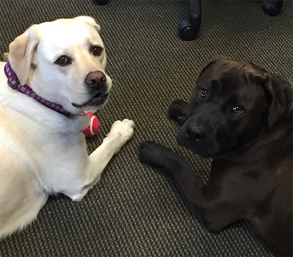 Maya and Humphrey at the office