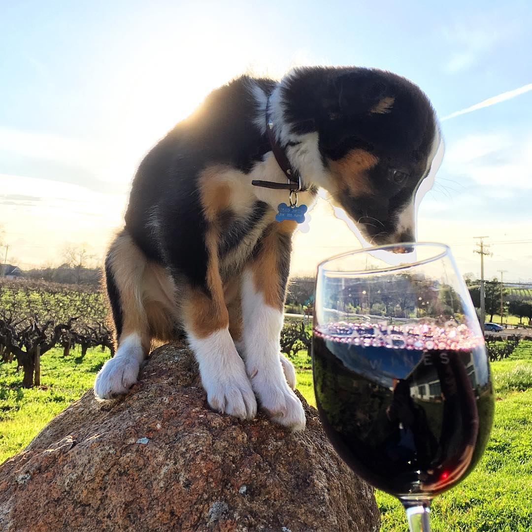 dog-friendly andis wines
