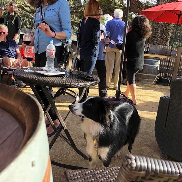 Bernardus Winery with dog