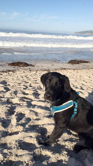 Bruno at Carmel Beach