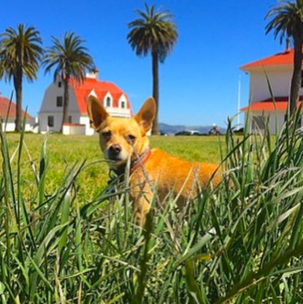 Charlie at Cavallo Point