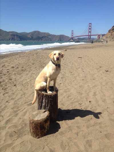Baker Beach dog