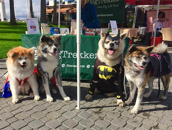 Boo! Bark, Brews + Bites! DogFest Bay Area 2018