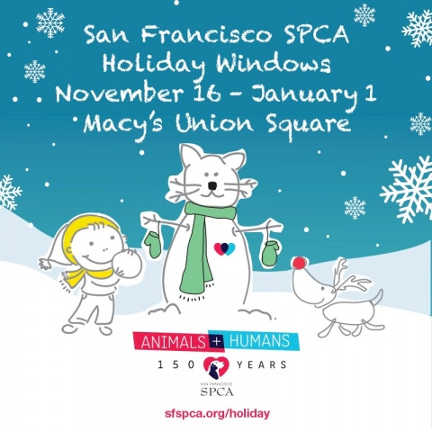 SF SPCA Holiday Windows