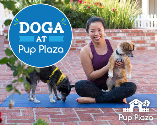 Doga at Pup Plaza