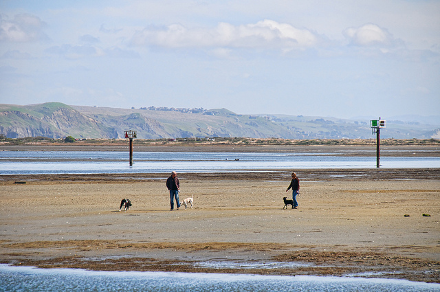 Dogs playing at Bodega Bay. Photo: DonJD2