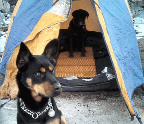 Camping! Photo BIlly Goodman