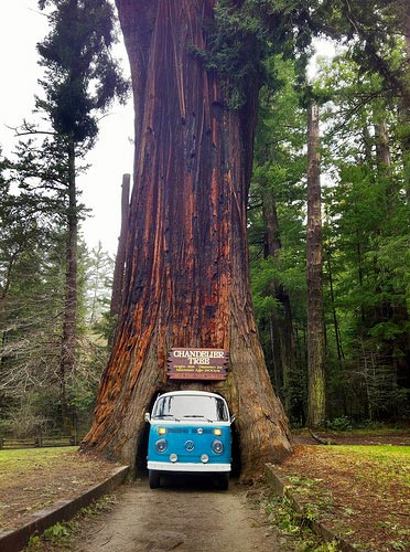 Chandelier drive thru tree park photo credit chandelier tree redwood coast cc mozeypictures Image collections