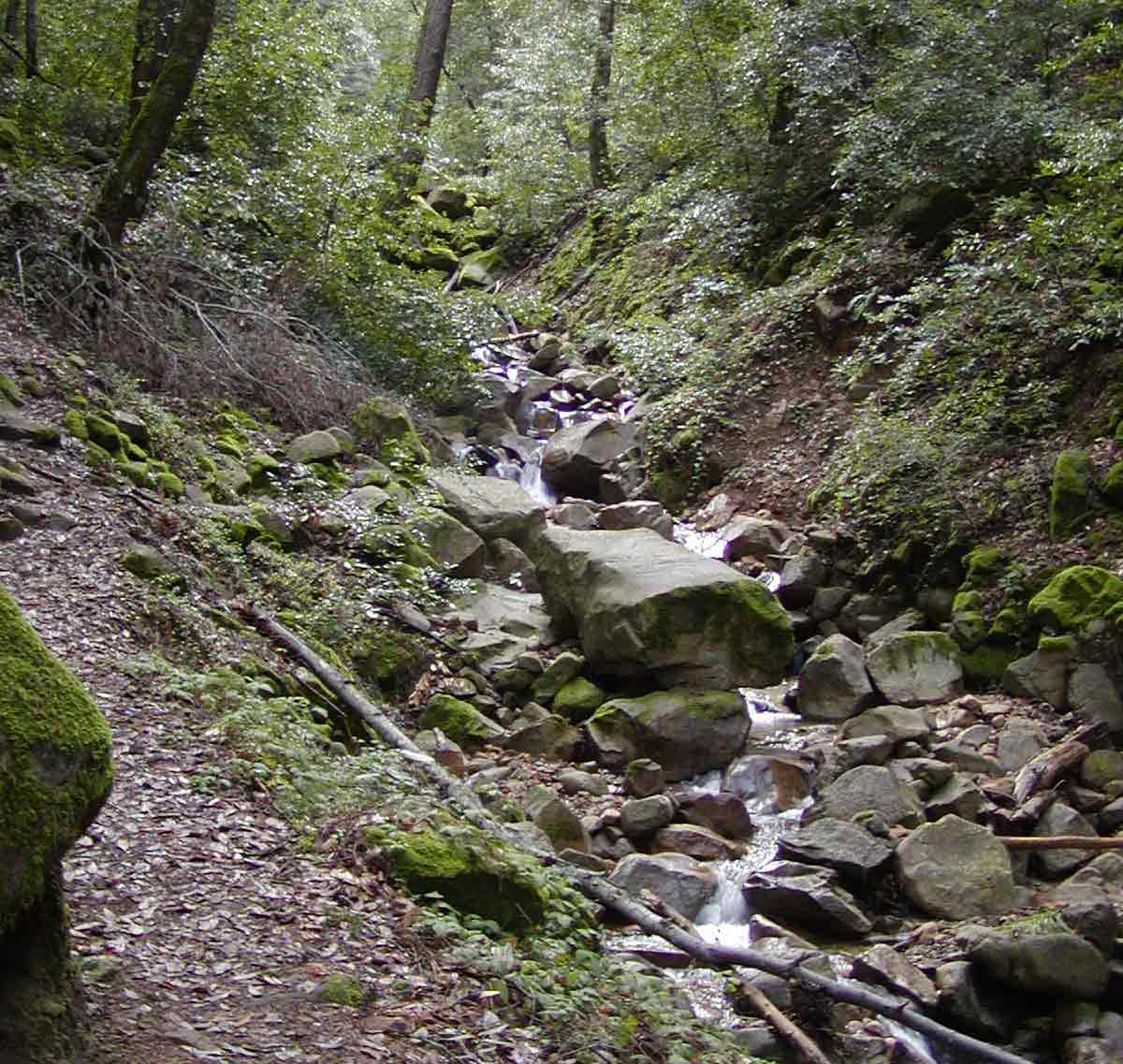 Swanson Creek, Uvas Canyon Park