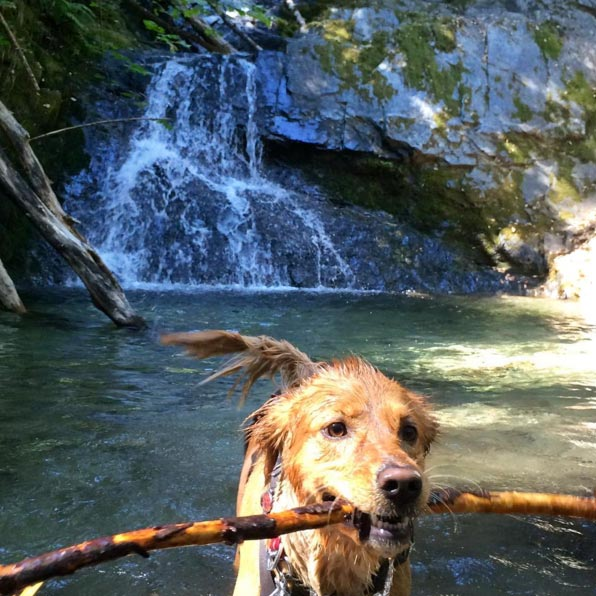 Nala at Boulder Creek Falls. Photo Credit: @larryvaupel