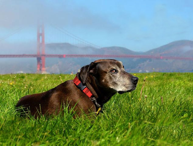Free to Be @ Crissy Field. Photo Credit: The Furrtographer