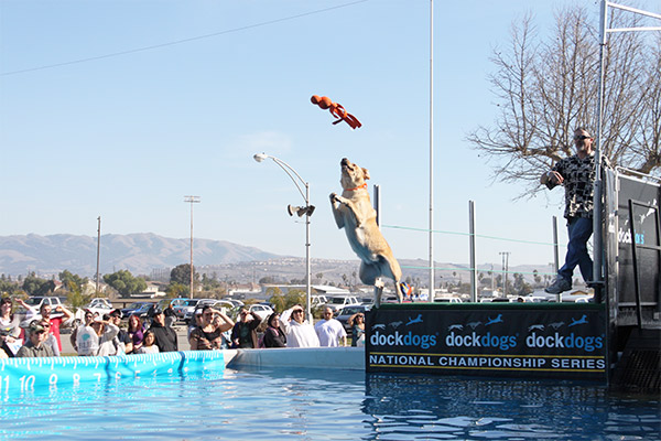 Making a Splash at the Bay Area Pet Fair.