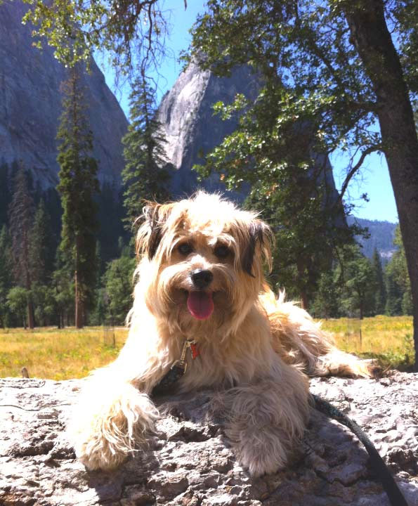 Simba in Yosemite. Photo Credit: James Oh