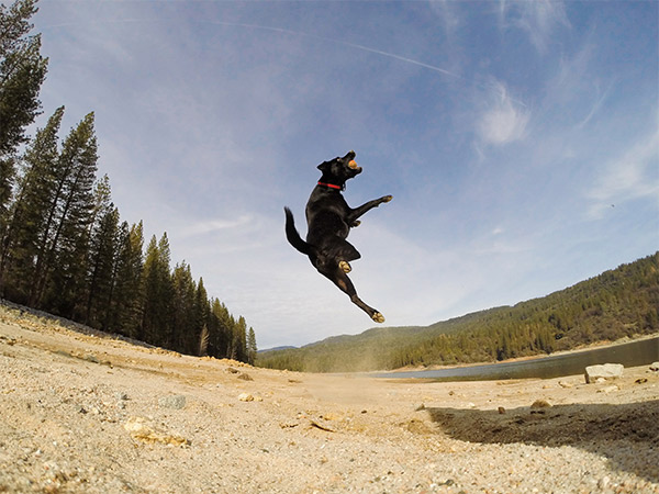 Kona makes the catch, Bass Lake. Photo Credit: Kimberly Lawson