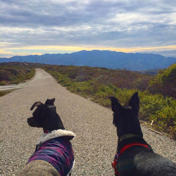 Best friends hike at Sweeney Ridge. Photo Credit: steph_schwartz