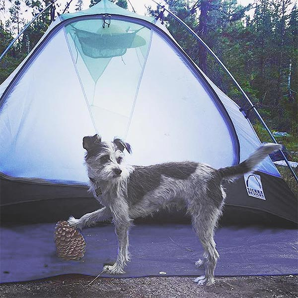 """Dibs on this tent and this pine cone."" Photo Credit: Grace Halliday"