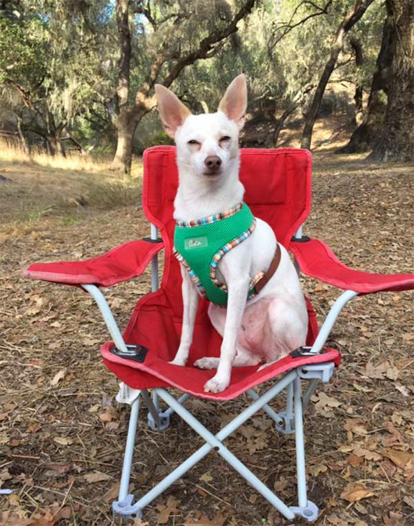 This is MY chair! Photo Credit: Sara Jo Martin