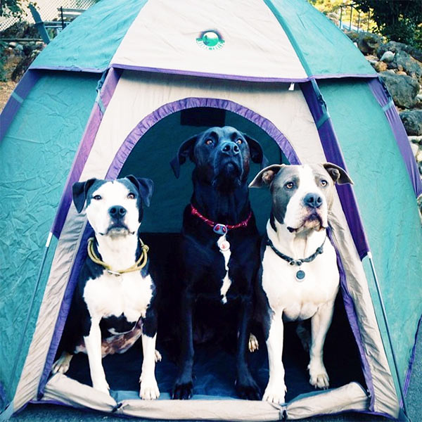 Dogs that camp.  Photo Credit: Cassie Elizarraraz