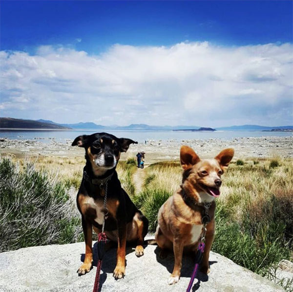 Penny and Kona, Mono Lake, CA. Photo Credit: @pianogin