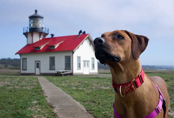 Point Cabrillo Lighthouse, Mendocino. Photo Credit: Berklee Akutagawa