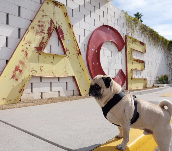 Vacation time at Ace Hotel, Palm Springs. Photo Credit: @admiralackbar