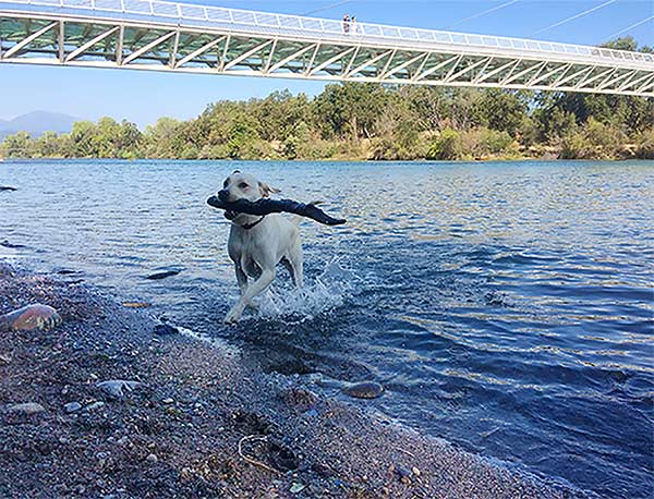 Fetch at the Sundial Bridge. Photo Credit: Laurinda Willard