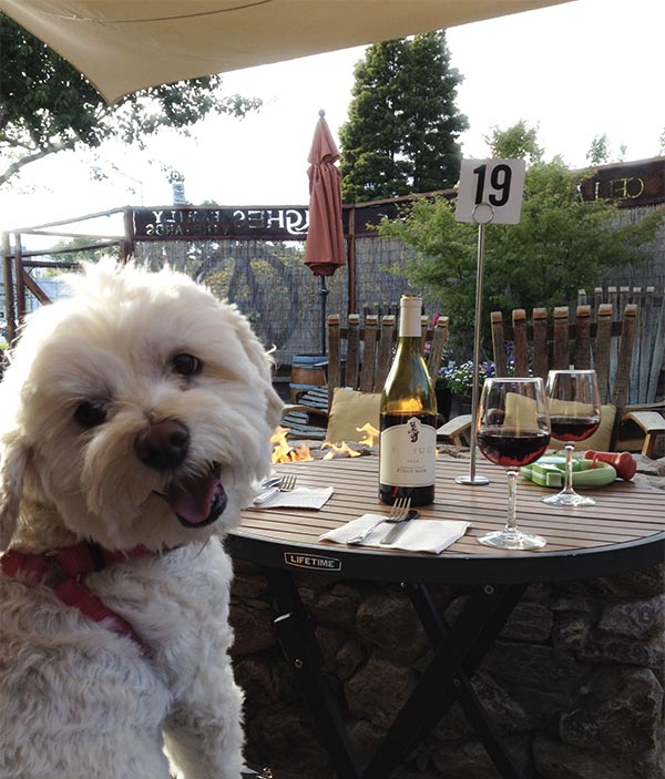 Layla at the Annex Wine Bar, Sonoma. Photo Credit: Linda Peters