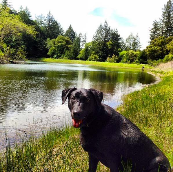 Marley at Hood Mountain Regional Park. Photo Credit: @tabitha3641