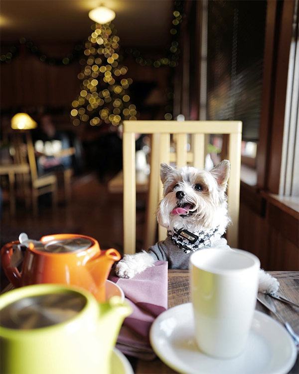 Oreo dines at Stanford Inn by the Sea. Photo Credit: @oreo.bb