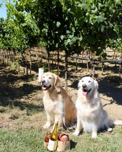 Navarro Vineyards - Photo Credit: @goldens_flutie_ferris