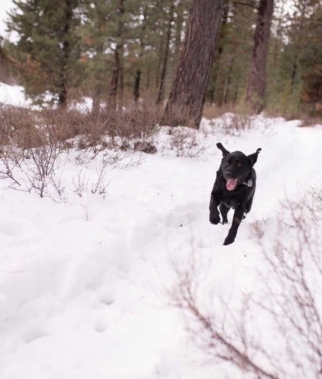 Elvis enjoying a snowy run along the Deschutes River. <br/>Photo Credit: @photographybylynnmarie