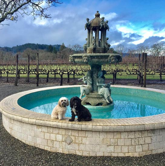 Xena and Willow at Clos Pegase Winery. Photo Credit: @xenaandwillow