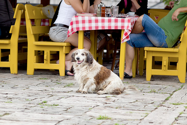 Dining doggie