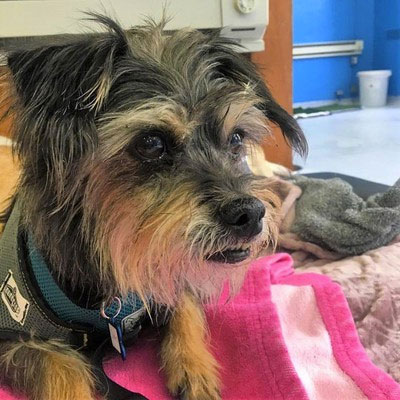 Photo: Chato - Muttville Senior Dog Rescue