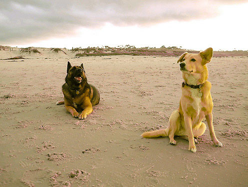 Winter beach dogs. Photo Credit: InstaDerek (CC)