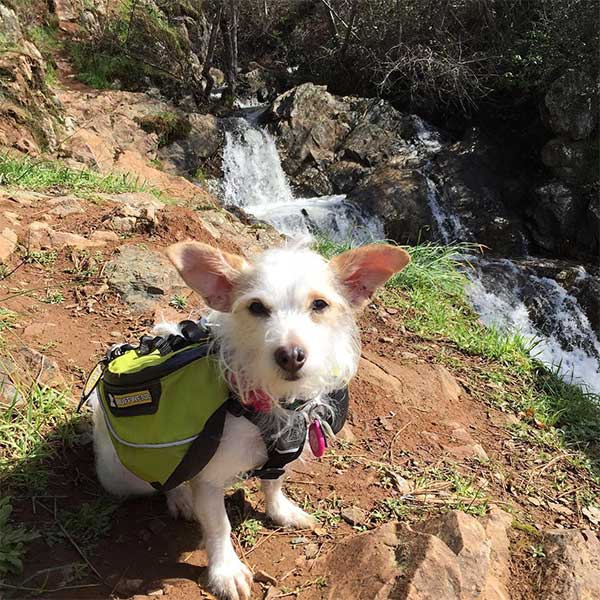 Bonny at Hidden Falls Regional Park. Photo Credit: @bonnybarks