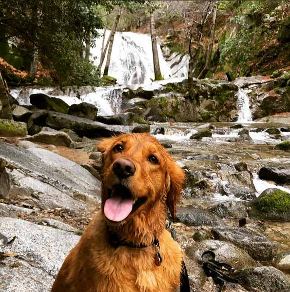 Nala at Whiskeytown National Recreation Area. Photo Credit: @larryvaupel