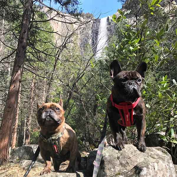 Marlowe & Boomie exploring Yosemite National Park.<br/> Photo Credit: @thenuggetbros