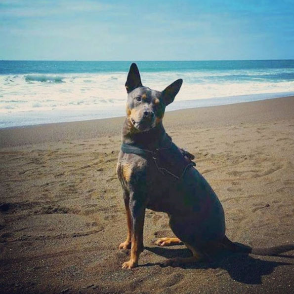 Make It Marin for Dog-Friendly GGNRA Trails and Beaches