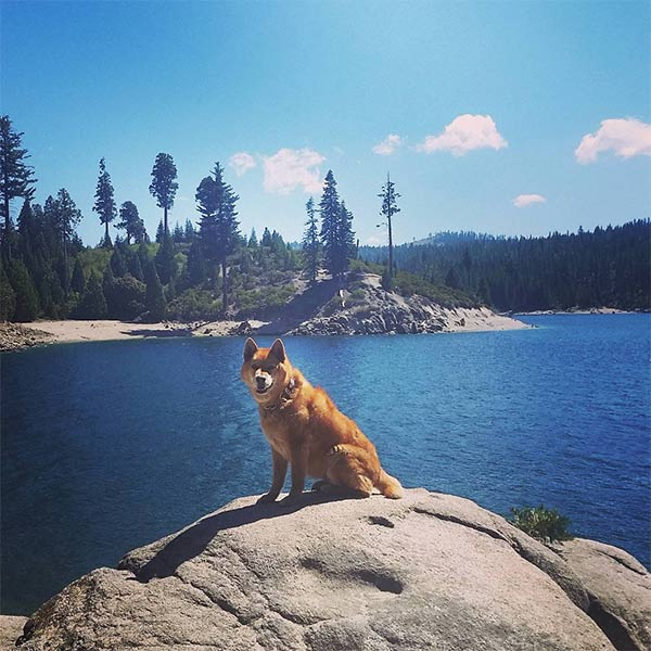 Yoshi at Ice House Reservoir. Photo Credit: @eastbaychico