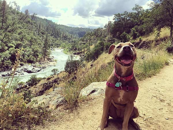 Georgie smiles big at South Yuba River State Park <br/>Photo Credit: @una.bella.vita