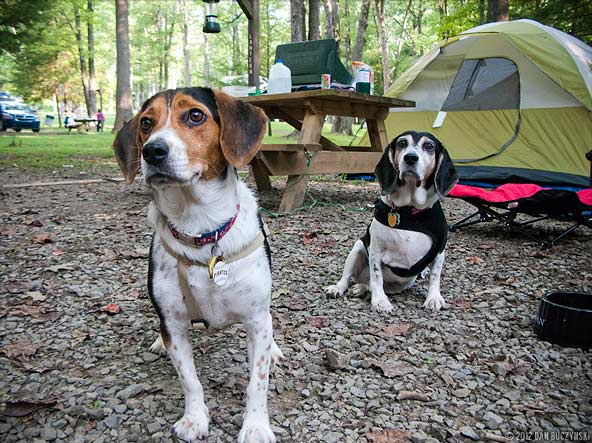 Pups camping. Photo credit: macwagen (CC)
