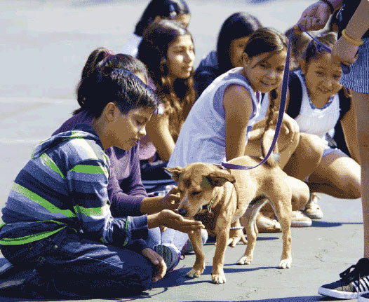 Kids and dogs teach each other - Santa Cruz SPCA