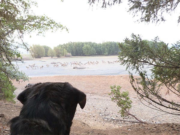 Mimi watches the Elk out in the distance. Photo Credit: Wendi Piscia